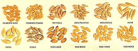 Impianto selezione sementi